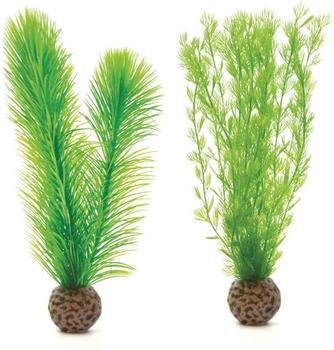biOrb Federfarn Set klein grün (46083)