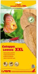 Sera sera Catappa Leaves XXL