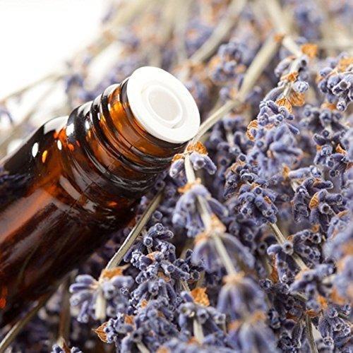 Spinnrad Ätherisches Öl Lavendel Maillette (50 ml)
