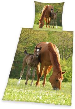 Herding Pferd mit Fohlen 80x80+135x200cm