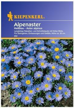 Kiepenkerl Alpenaster hellblau
