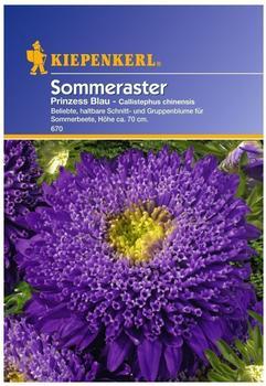 Kiepenkerl Prinzess-Aster blau