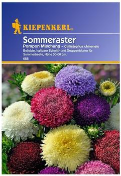 Kiepenkerl Sommeraster Pompon Mischung