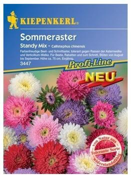 Kiepenkerl Sommeraster Standy Mix