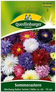 Quedlinburger Saatgut Sommeraster Standy Mix