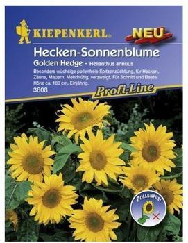 Kiepenkerl Hecken-Sonnenblume Golden Hedge