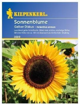 Kiepenkerl Sonnenblume Gelber Diskus