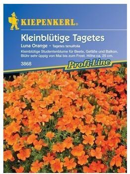 """Kiepenkerl Kleinblütige Tagetes """"Luna Orange"""""""