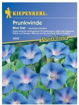 """Kiepenkerl Prunkwinde """"Blue Star"""""""