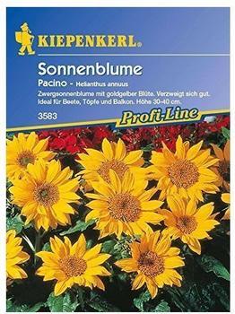 "Kiepenkerl Sonnenblume ""Pacino"""