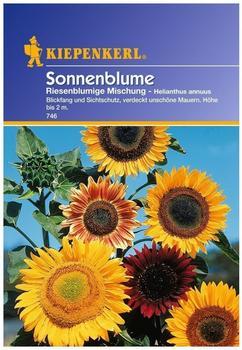 "Kiepenkerl Sonnenblume ""Riesenblumige Mischung"""