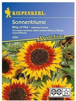 """Kiepenkerl Sonnenblume """"Ring of Fire"""""""
