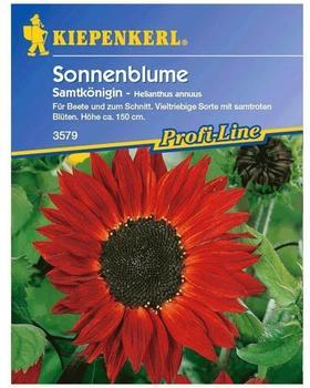"Kiepenkerl Sonnenblume ""Samtkönigin"""