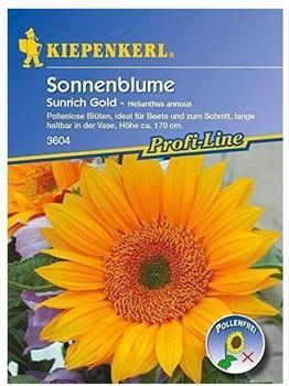 """Kiepenkerl Sonnenblume """"Sunrich Gold"""""""