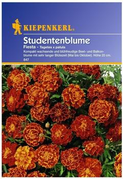 """Kiepenkerl Studentenblume """"Fiesta"""""""