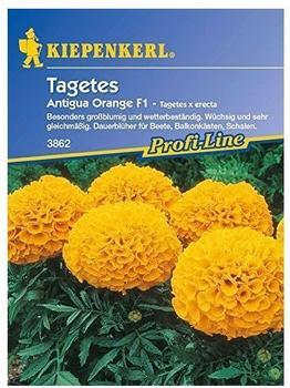 """Kiepenkerl Tagetes """"Antigua Orange"""" F1"""