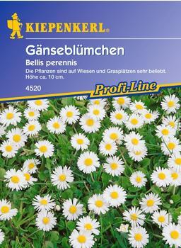 Kiepenkerl Gänseblümchen