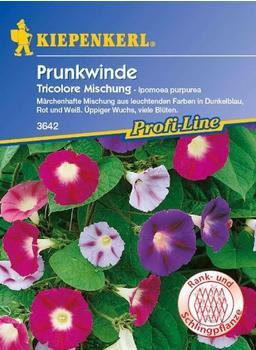 """Kiepenkerl Prunkwinde """"Tricolore Mischung"""""""