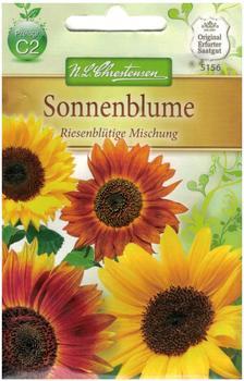 Chrestensen Sonnenblume Riesenblütige Mischung