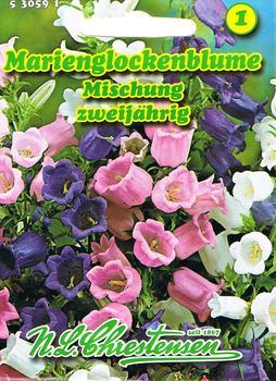 Chrestensen Marienglockenblume