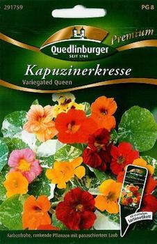 Quedlinburger Saatgut Kapuzinerkresse 'Variegated Queen'