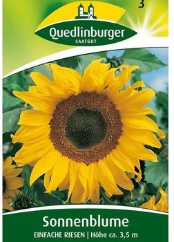 Quedlinburger Saatgut Sonnenblume 'Einfache Riesen'