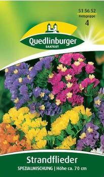 Quedlinburger Saatgut Strandflieder 'Spezialmischung'