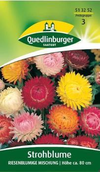 Quedlinburger Saatgut Strohblume 'Riesenblumige Mischung'