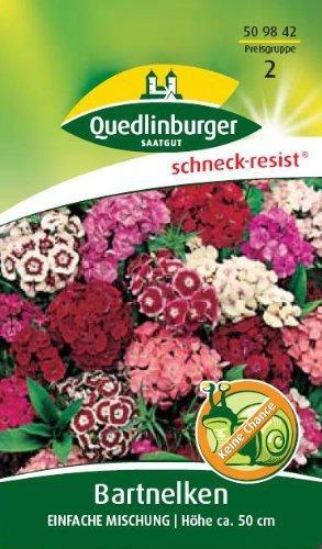 Quedlinburger Saatgut Bartnelke 'Einfache Mischung'