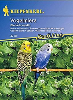 Kiepenkerl Vogelmiere