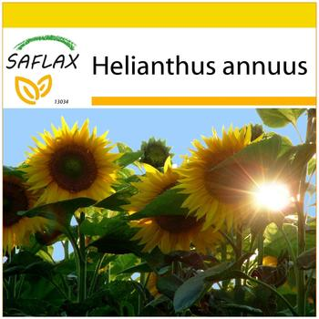 Saflax Anzucht-Set Sonnenblume Titan F1