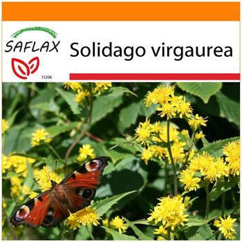 Saflax Garden in the Bag 'Echte Goldrute' Anzucht-Set