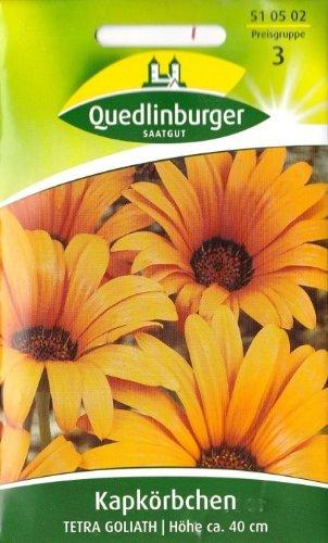 Quedlinburger Saatgut Afrikanische Goldblume