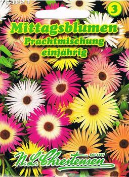 Chrestensen Mesmbryanthemum Prachtexemplar