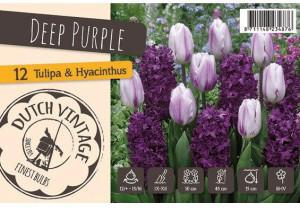 Chrestensen Tulpen und Hyazinthen Deep Purple Mischung