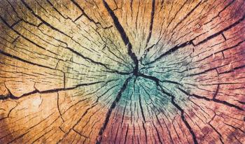 Wash+Dry Wood Land 70x120cm multicolor