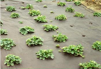 Noor Mulchvlies für Salat 1,6 x 4,2m
