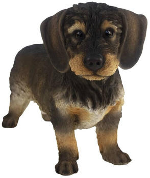 Esschert Dachshund Puppy
