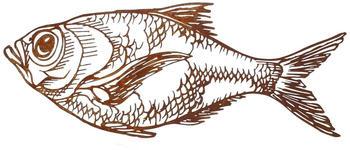 Saremo Dekoelement Fisch (FISCHD70)