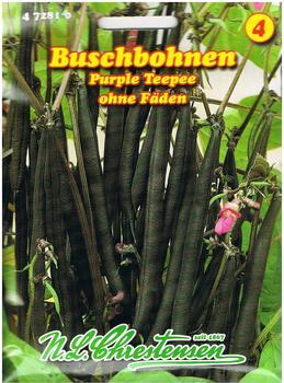 Chrestensen Buschbohne Purple Teepee