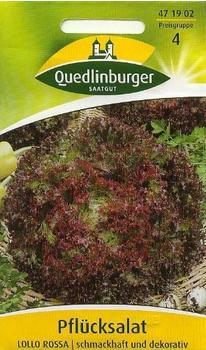 Quedlinburger Saatgut Pflücksalat Lollo Rossa