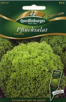 Quedlinburger Saatgut Pflücksalat Leonora