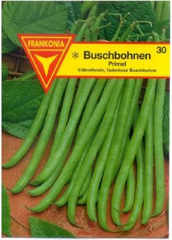 Frankonia Buschbohne Primel