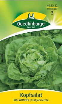 Quedlinburger Saatgut Kopfsalat Mai Wunder
