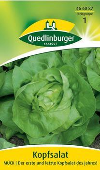 Quedlinburger Saatgut Kopfsalat Muck
