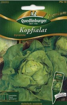 Quedlinburger Saatgut Kopfsalat Dynamite
