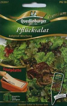 Quedlinburger Saatgut Pflücksalat Babyleaf
