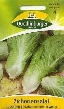 Quedlinburger Saatgut Zichorie Zuckerhut