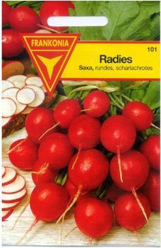 Frankonia Radieschen Saxa
