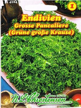 Chrestensen Endivien Grosse Pancaliere (Grüne große Krause)